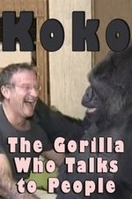 2778783_Koko_The_Gorilla_Who_Talks_to_People_2016_16.jpg