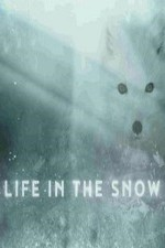 2787285_Life_in_the_Snow.jpg